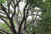 Botanischer Garten Kirstenbosch (Kapstadt)