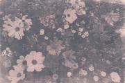 Cyanotypie, getont mit Schwarztee